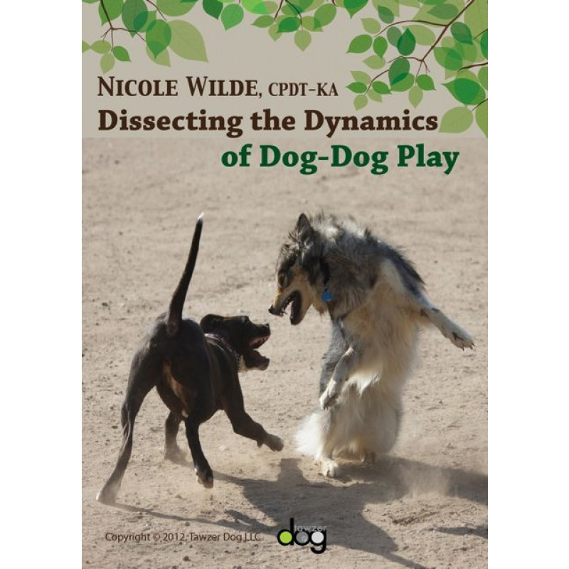 dissecting the dynamics of dog dog play