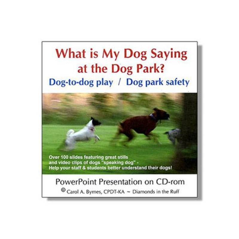 what-is-my-dog-saying at the dog park
